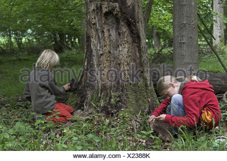 boy and a girl examining deadwood in the forest - Stock Photo