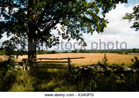 Tree by field - Stock Photo