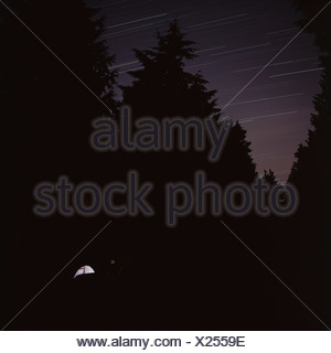 Silhouettes of trees against a starry night sky - Stock Photo