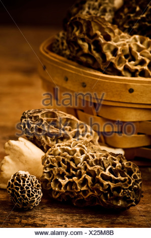 A variety of freshly picked morel mushrooms on wood table - Stock Photo