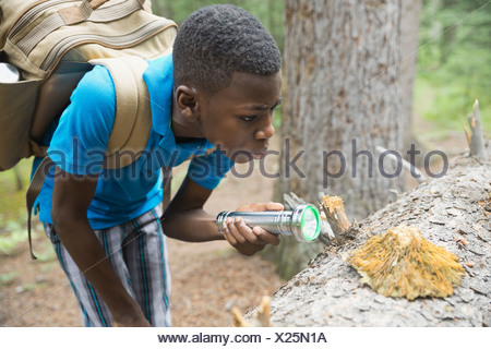 Boy examining fungus on tree trunk in forest - Stock Photo