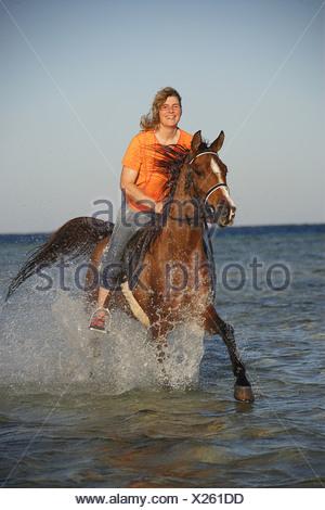 rider on Arabian horse  - riding through water - Stock Photo