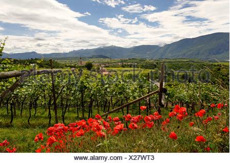 Missian near Eppan an der Weinstrasse, wine route, Ueberetsch, Bozen Unterland, Oltradige-Bassa Atesina district, South Tyrol - Stock Photo