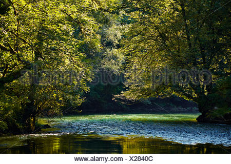 River flowing through a green forest in summer in the backlight - Stock Photo