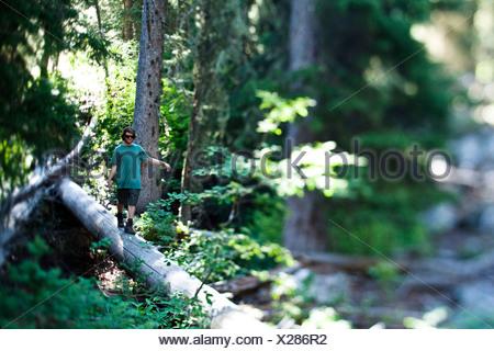 A young man hiking walks across a fallen log in Wyoming. - Stock Photo