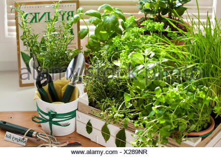 hand made decorated box with herbs - Stock Photo