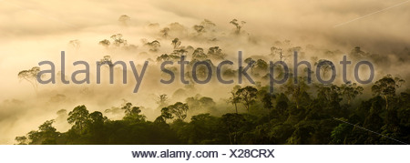 Mist low cloud hanging over lowland dipterocarp rainforest just after sunrise Danum Valley Sabah State Island Borneo Malaysia - Stock Photo