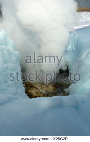 The black growler steam vent pumps out steam while surrounded by its own ice walls. - Stock Photo