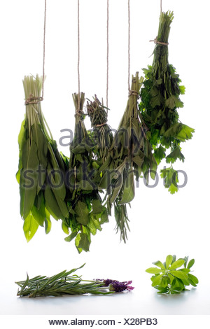 Bunches of different herbs as parsley, sage, rosemary, mint, bear's garlic,sweet  woodruff, lavender, - Stock Photo