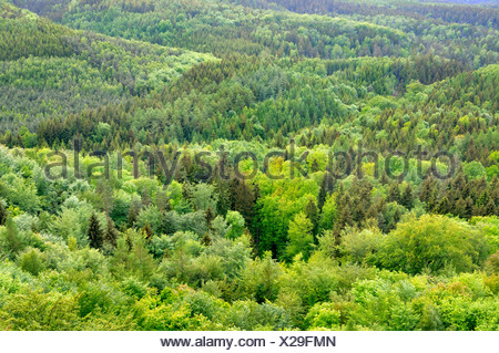 view of mixed forest in spring, Germany, Saxony, Saxon Switzerland National Park - Stock Photo