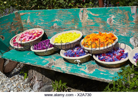 Baskets of flowers on wooden bench - Stock Photo