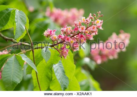 deciduous tree, flower, flowers, plant, spring, gaudy, hybrid, rot, colorful, - Stock Photo