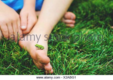Close-up of a miniature frog on a boy's foot - Stock Photo