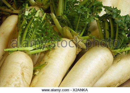 radish - radish 01 - Stock Photo