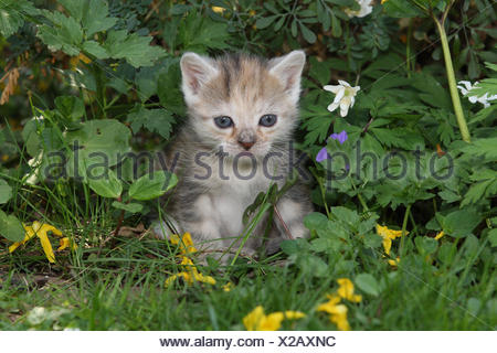 Cat, young, sit, meadow, garden, animals, mammals, pets, small cats, Felidae, domesticates, house cat, young animal, kitten, small, awkward, clumsy, helplessly, sweetly, play, curiosity, flowers, hervorschauen, plants, individually, alone, young animals, animal baby, nature, outside, - Stock Photo