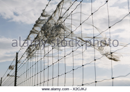 Seattle Washington USA shredded plastic bag caught on barbed wire fence - Stock Photo