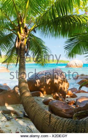 Under palms on Praslin, the Seychelles - Stock Photo