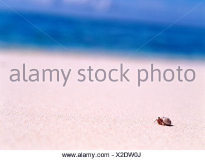 Hermit crab on beach - Stock Photo
