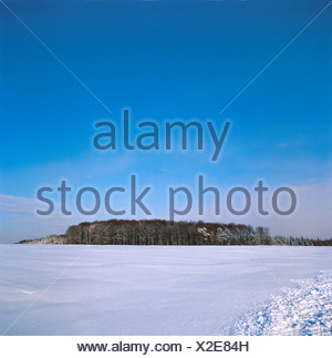 Field in front of forest - Stock Photo