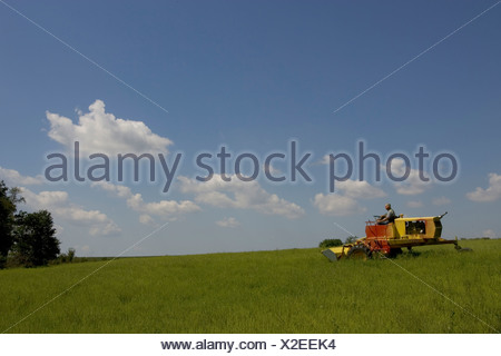 A man on a tractor harvests ragweed pollen at his fam in Sedalia Missouri. - Stock Photo