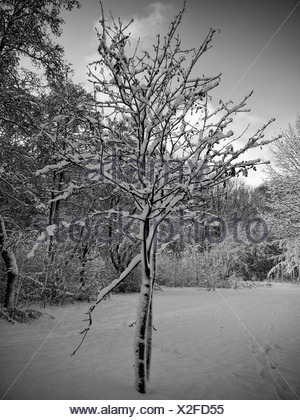 Snow-covered tree, forest, retro look, Gysenberg, Herne, Ruhr Area, Germany, Europe - Stock Photo