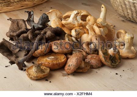 Variety of fresh picked wild mushrooms. - Stock Photo