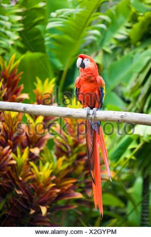Macaw perched on branch - Stock Photo