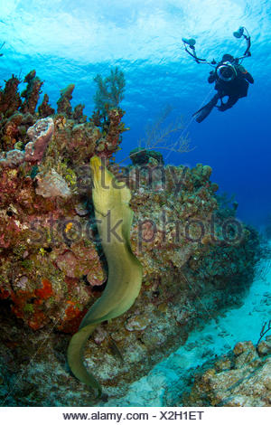 Underwater photographer trying to capture picture of free swimming moray eel. - Stock Photo