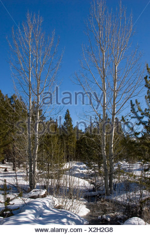 WINTER LANDSCAPE in the Deschutes National Forest near Three creeks lake Road, USA, Oregon - Stock Photo