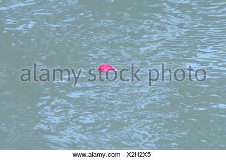 Single rose petal in water - Stock Photo