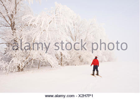 a man snowshoes towards frost covered trees in shelter belt, near Cooks Creek, Manitoba, Canada - Stock Photo