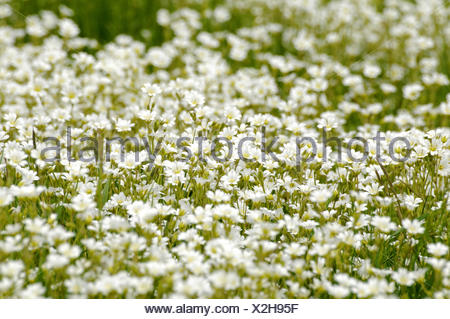 Blumenwiese flower meadow - Stock Photo