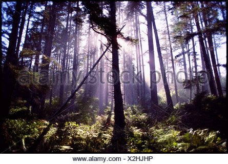 Silhouette of trees in forest - Stock Photo