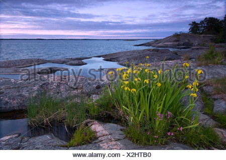 Yellow flower on rocky shore - Stock Photo