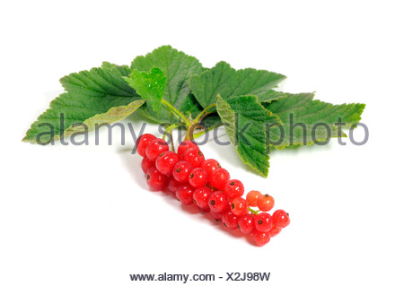 Fresh Redcurrant berries (Ribes rubrum) with leaves - Stock Photo