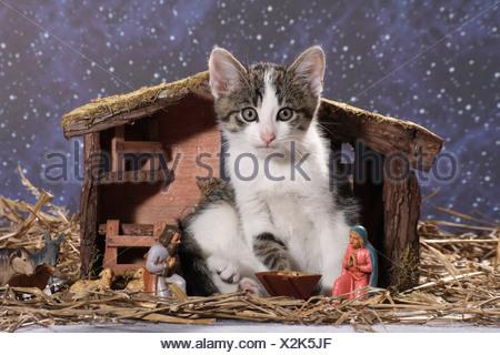 Domestic Cat. Kitten sitting in a crib - Stock Photo