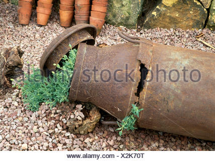 Close-up of a rusted old milk churn with green plants on gravel - Stock Photo
