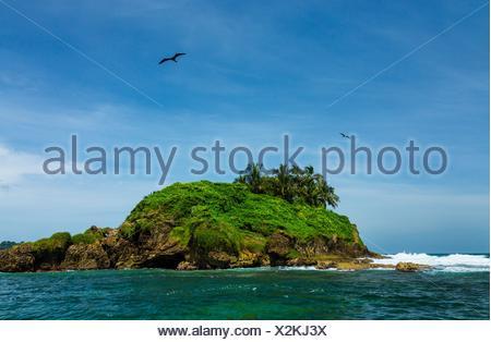 Magnificent Frigatebird Fregata magnificens, Birds Island, Bocas del Toro Archipelago, Bocas del Toro Province, Panama, Central - Stock Photo