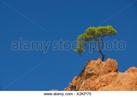 Esterel coast, the Cap Dramont, south east of France, France, Saint Raphael - Stock Photo