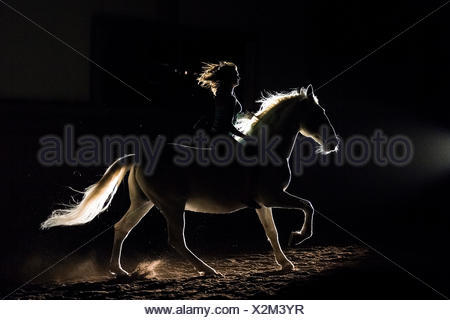 Lipizzan horse. Adult stallion (Siglavy Capriola Primas) with rider in darkness, seen against light. Austria - Stock Photo