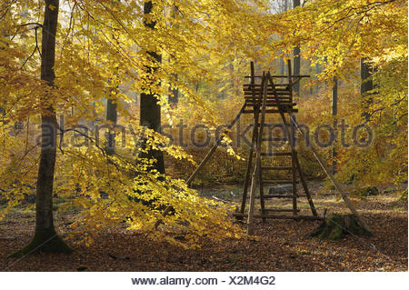 Hunting hide in beech forest, Germany - Stock Photo