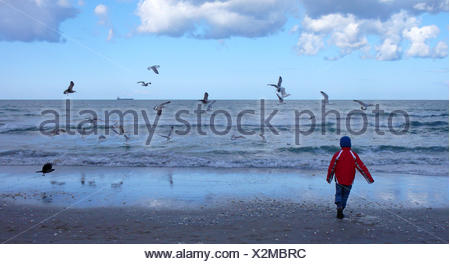 little boy walking on a sand beach in front of the surf over which sea birds are flying looking for food, Germany, Mecklenburg-Western Pomerania, Ruegen, Binz - Stock Photo