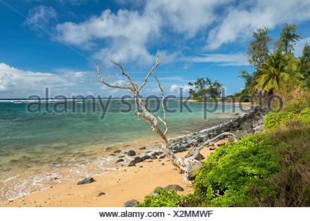 USA,Hawaii,Molokai,Molokai beach - Stock Photo