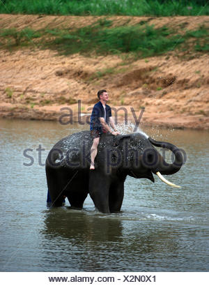 Man sitting on elephant in river, Thailand - Stock Photo