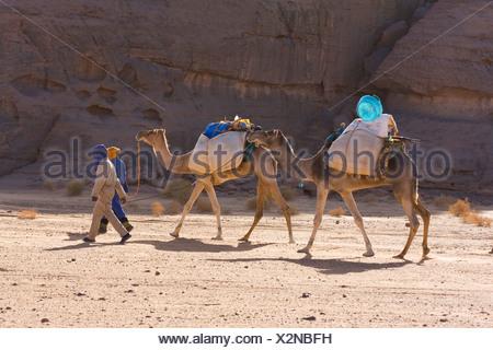 Camel caravan in the Libyan desert, Camels (Camelus dromedarius), Akakus Mountains, Libya, Sahara, North Africa, Africa - Stock Photo