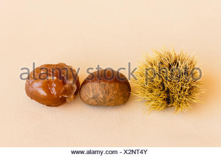 transformation of a chestnut - Stock Photo