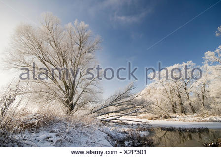 Hoar frost on trees in winter in the river elbe floodplains, Saxony-Anhalt - Stock Photo