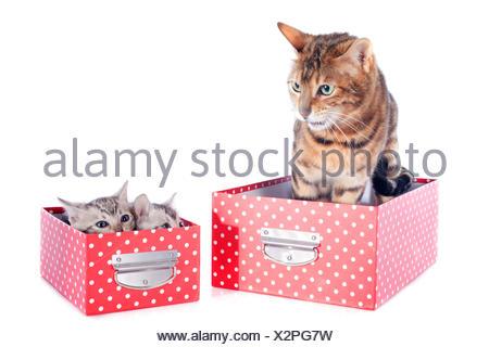 adult three mother - Stock Photo