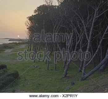Vignola Mare - Stock Photo