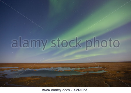 Curtains of colored northern lights (aurora borealis) dance in the night sky over the arctic tundra on the coastal plain of ANWR - Stock Photo